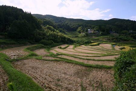 Rice terraces at Nagatani Osaka Standard-Bild - 93833633