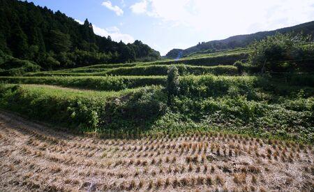Rice terraces at Nagatani Osaka Stock Photo