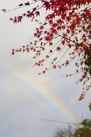 Autumn leaves and rainbows