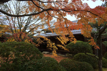 Autumn leaves in the Japanese garden 写真素材