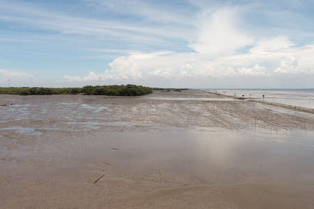 foreshore: Foreshore of Mangrove forest in thailand