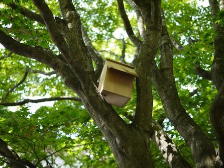 bird's nest Stock Photo - 20849646