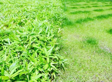 feuille de bambou: des feuilles de bambou et de l'herbe