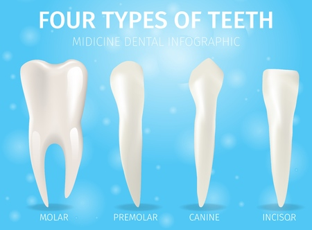 Realistic Banner Illustration Four Types of Teeth. Vector 3d Image Set Dental Teeth Different Shapes and Sizes Molar, Premolar, Canine, Incisor. Oral Health Chart. Isolated on Blue Background Standard-Bild - 114365190
