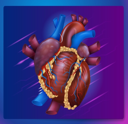 Realistic Vector Illustration Human Healthy Heart. Image Projection Anatomy Heart. Poster for Detailed Study Structure Cardiovascular System Organism. Isolated on Purple Background Illustration