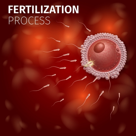 Female Cell Fertilization Process. Spermatozoons Flowing to Egg Inside of Uterus. Microscopic Details. Human Reproduction Scheme. Medical Infographic Banner or Poster, Vector Realistic Illustration.