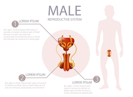 Male Reproductive System. Abstract Faceless Guy Stand on White Background. Anterior Man Genitals with All Important Components. Medical Vector Realistic Illustration, Anatomical Banner with Copy Space