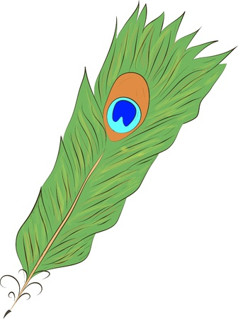 peafowl: peacock Feather-vector illustration