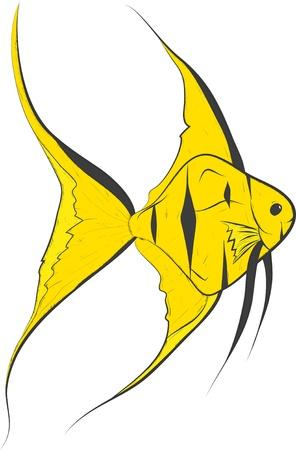 scalar: Fish - scalar Illustration