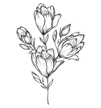 illustrated: Illustrated flowers