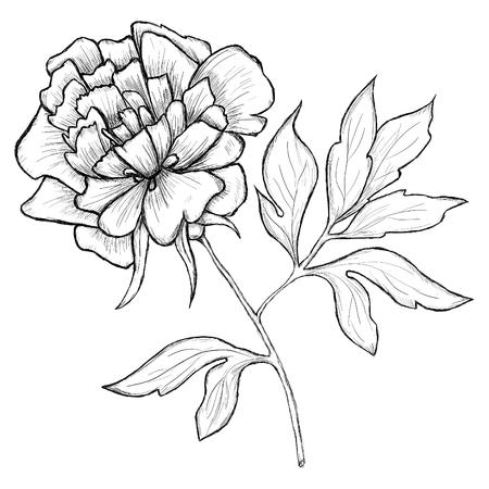 illustrated: illustrated flower