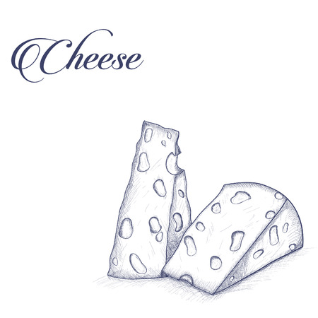 Vintage  cheese in sketch style
