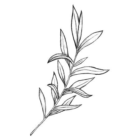 spring leaf: Illustrated flowers