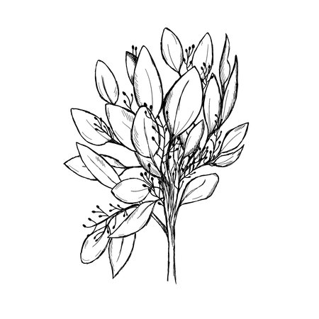 Sketch of a eucalyptus branch isolated on a white background. Hand-drawn