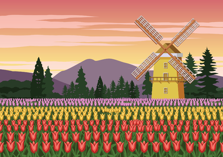 tulip garden,famous symbol of Holland and wind mill around with beautiful nature,vintage color,vector illustration