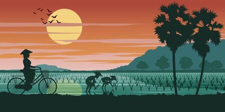 Vietnamese woman ride bicycle pass rice field while people planting on sunset time, vector illustration Çizim