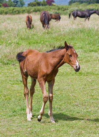 reci�n nacidos de caballos Foto de archivo - 1282968