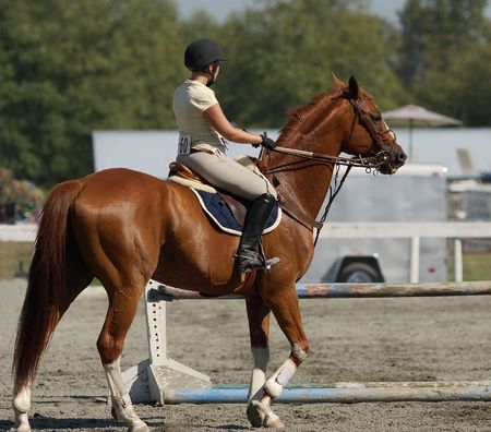 horse jumping: horse and rider ready to compete