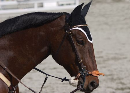 馬と障害飛越競技のコンペ案のヘッド ショット