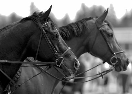 horses waiting to compete 免版税图像