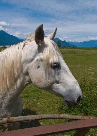 馬の肖像画