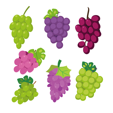 grape vector collection design, fruits collection, food healthy set