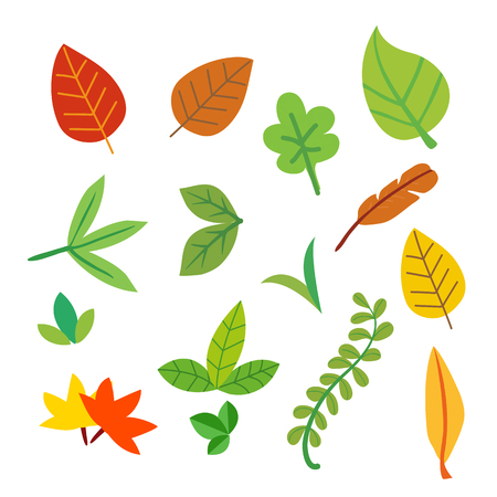 leaf vector collection design, leaves vector collection design