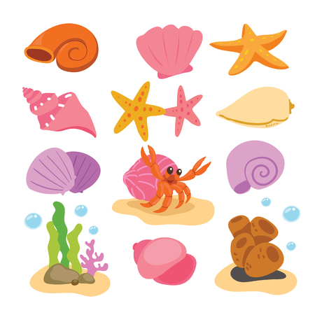 shell vector collection design Illustration