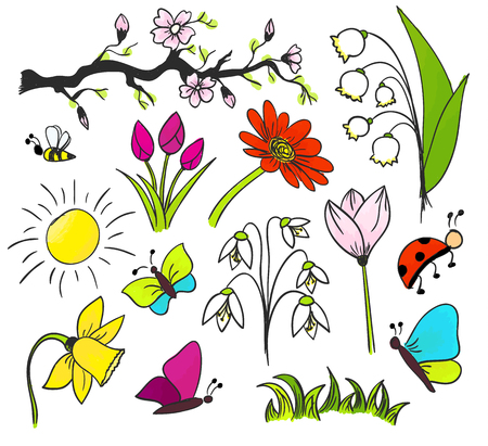 Spring flowers vector drawing isolated colorful Illustration