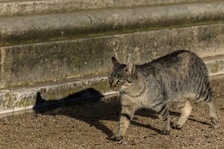 Cat walking quietly in the garden