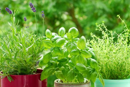 fresh herbs in pots on balcony garden Stock Photo