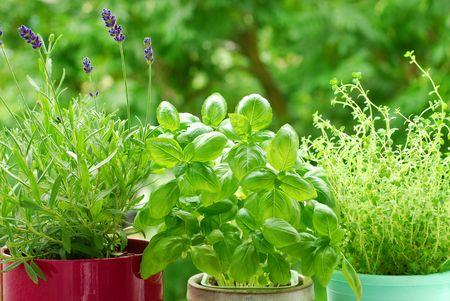 thyme: verse kruiden in potten op het balkon, Tuin  Stockfoto