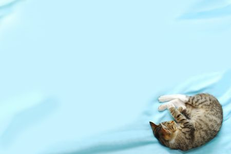 blue background with sleeping little cat down in right corner photo