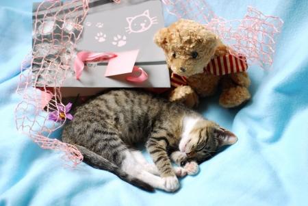 sweet sleeping little kitten , gift bag and teddy bear as present photo