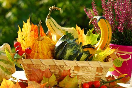 basket full  of colorful  autumn garden  harvest