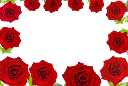 red roses around frame isolated on white photo