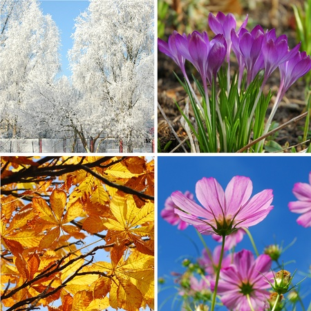 nature collage in square shape with  four seasons of the year