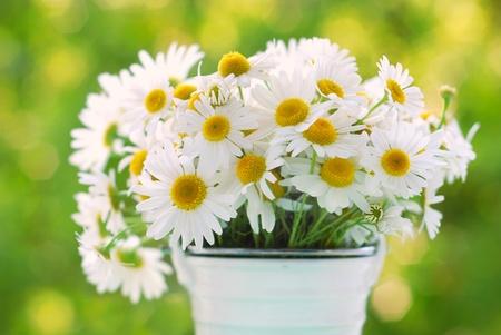 정원에서 테이블에 카모마일 꽃의 무리