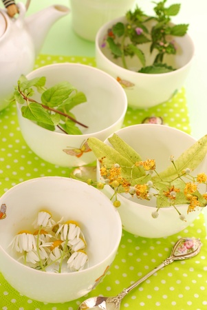 four bowls to prepare various herb`s tea-chamomile,linden,mint and nettle Stock Photo - 9958953