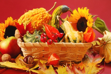 gourds: still life with basket full of  colorful autumn garden harvest