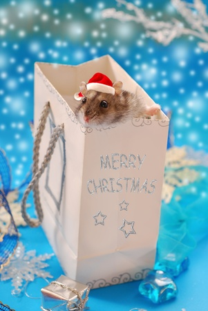 santa hamster: sweet little hamster with santa claus hat in paper  bag as christmas gift Stock Photo
