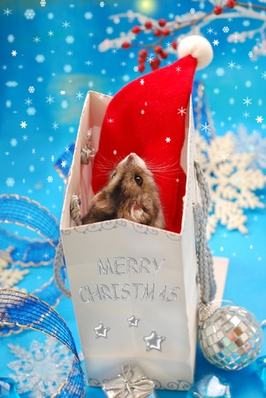 domestic scene: sweet little hamster  in paper gift bag looking at the  first star and waiting for christmas  Stock Photo