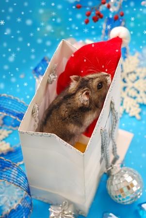 sweet little hamster  in paper gift bag  waiting for christmas