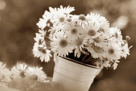 beeld van de tros van kamille bloemen in vintage stijl