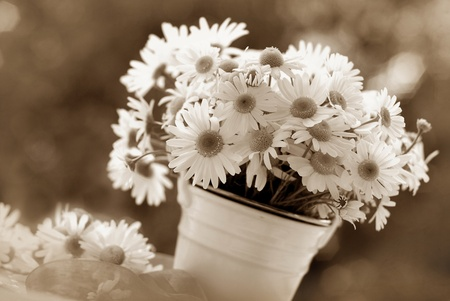 daisies: image of bunch of chamomile flowers in vintage style