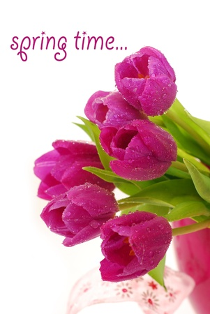 bunch of fresh purple tulips with dew drops against  white background photo