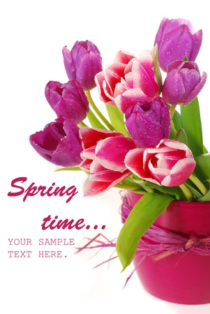 tulips in vase: bunch of fresh pink and purple tulips in vase against  white background