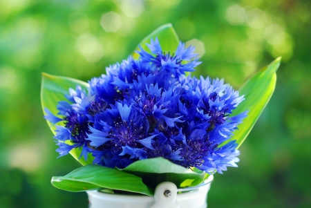 bouquet of fresh blue cornflowers in the garden photo