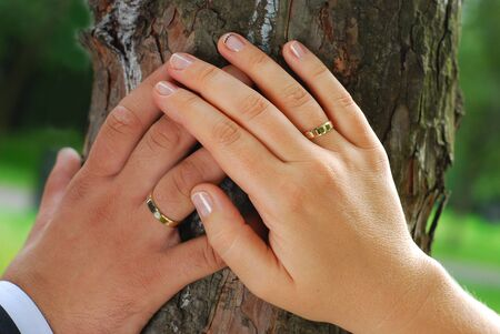 hands of just married bride and groom with wedding rings based on the tree photo