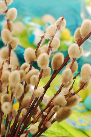 pussy tree: willow branches with pussy catkins as easter decoration Stock Photo